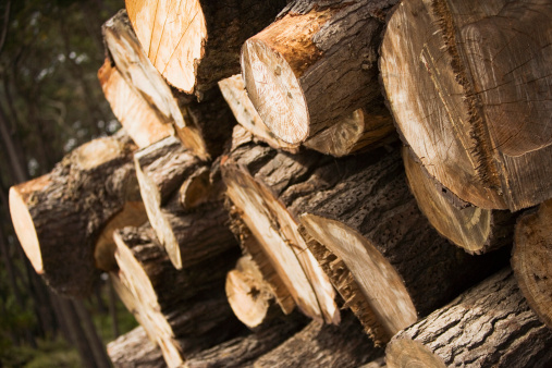 A Look at Lumber Prices and a Timber ETF