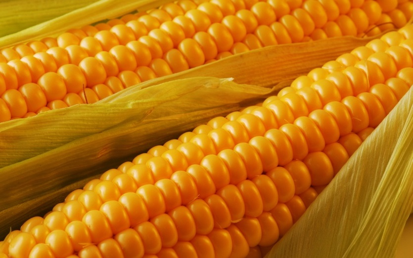 Corn ETF Looks to Breakout