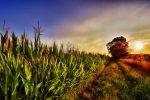 Big Investors Love This Agriculture ETF