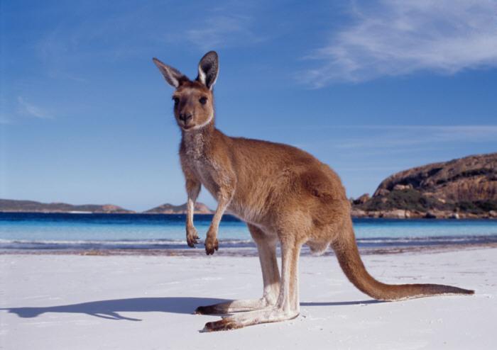 Australia's Attractive Valuations in ETFs
