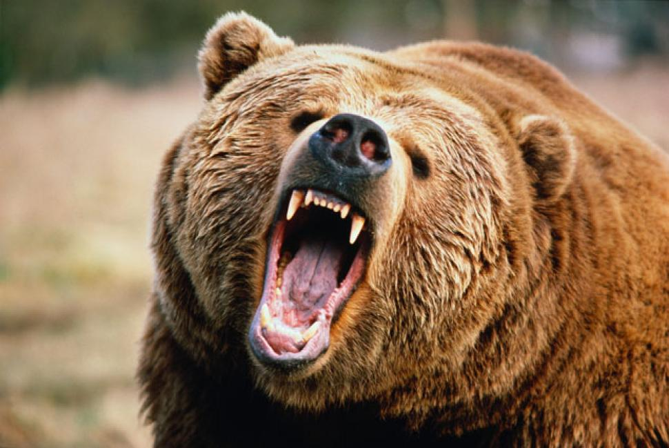 DBA: Commodities ETF Tries to Fend off the Bears