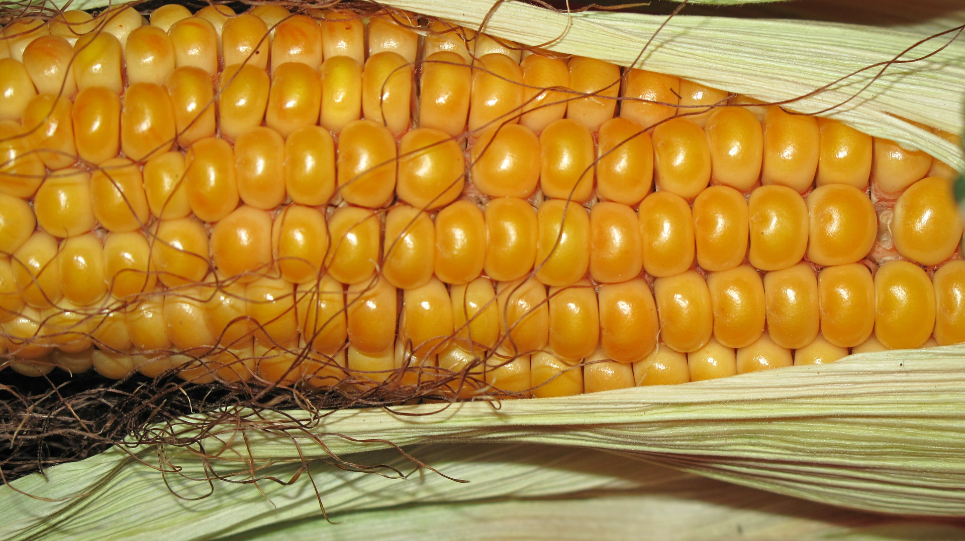 A Seasonal Turning Point for Corn ETF