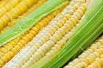 A Corny Catalyst for CORN ETF