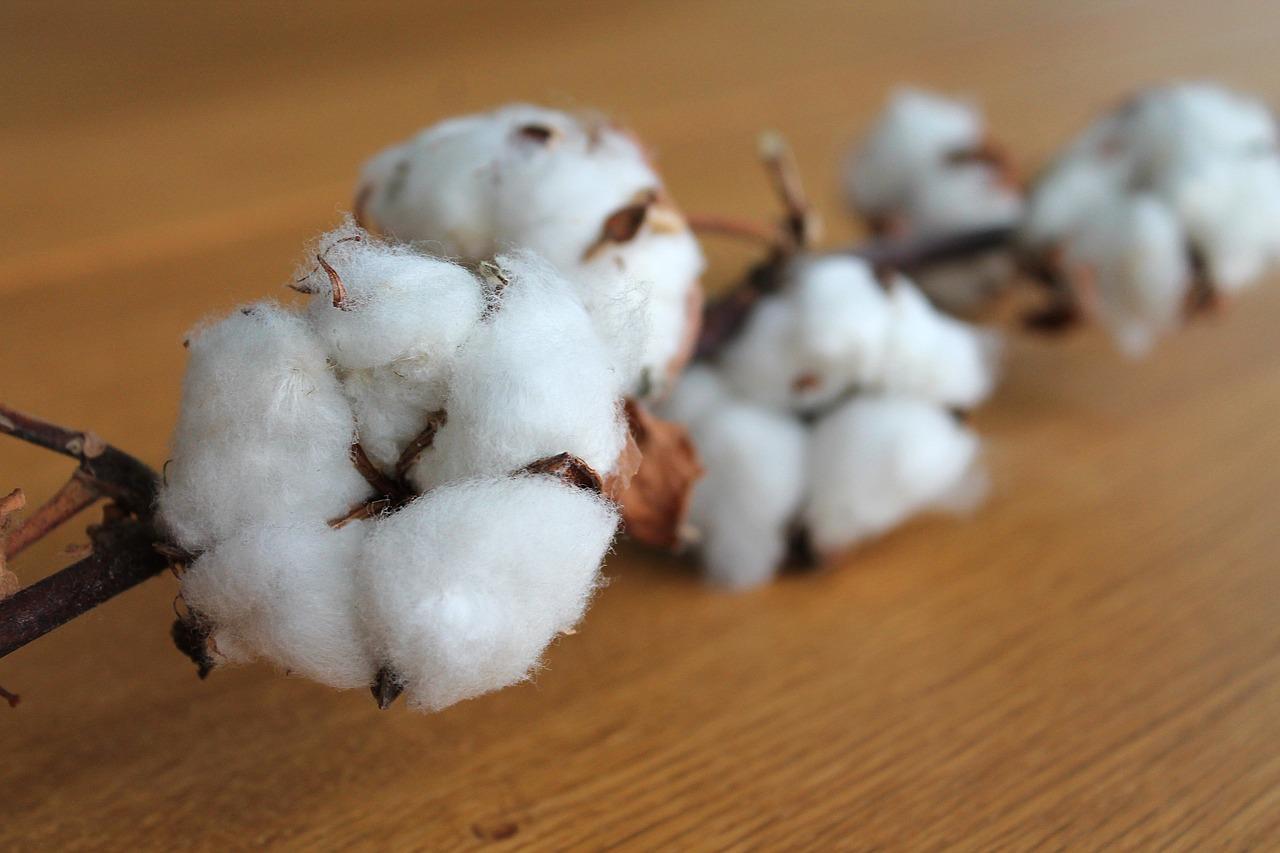 Cotton ETN Faces Challenges