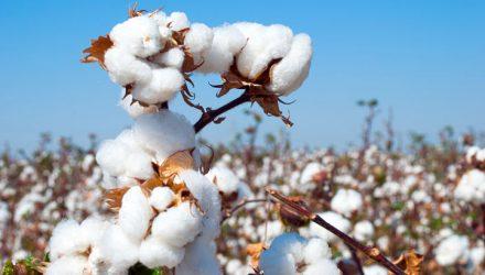 Pressure Remains on Cotton ETN