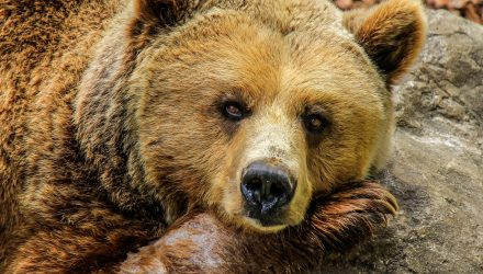 ETF Response to a Bear Market Possibility