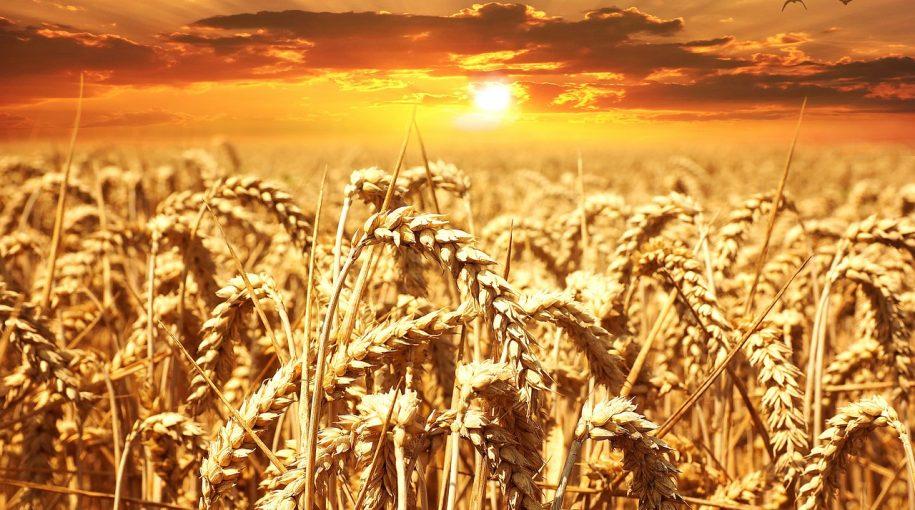Weather Concerns Help Wheat ETF Flourish