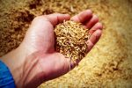 Grain ETFs Surge as U.S. Cuts Back in Planting Season