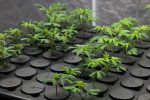 Marijuana ETF Reaches 10x Valuation in Less than a Year