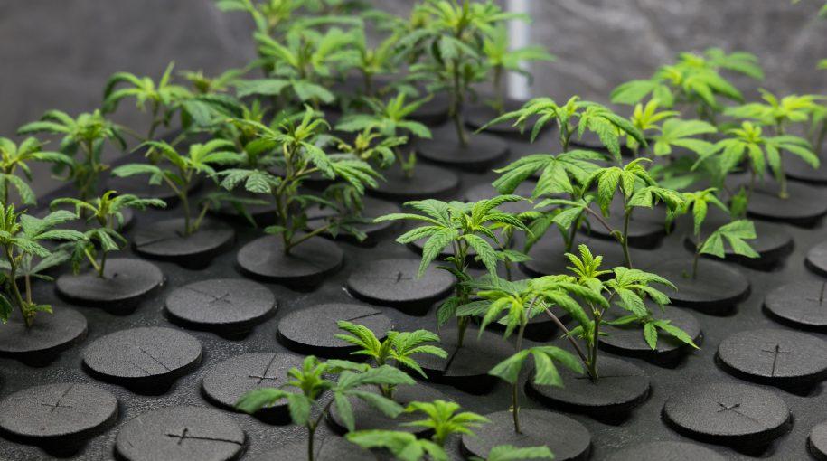 What's Holding Back Marijuana ETFs?