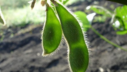 Why Trade Policy Won't Affect Long Term Price of Soybeans