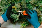Horizons ETFs to Launch 3 Canada Marijuana ETFs