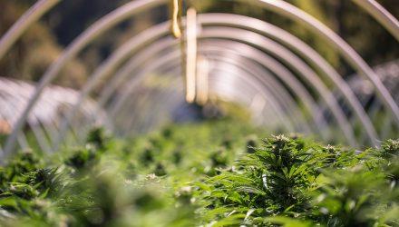 Marijuana ETFs Grow on Canadian Parliament's Ruling