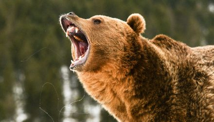 The Bond Market Will Be the Bear that Crushes the Equity Market