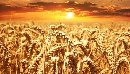 Bargain Hunters Look to Oversold Wheat ETF